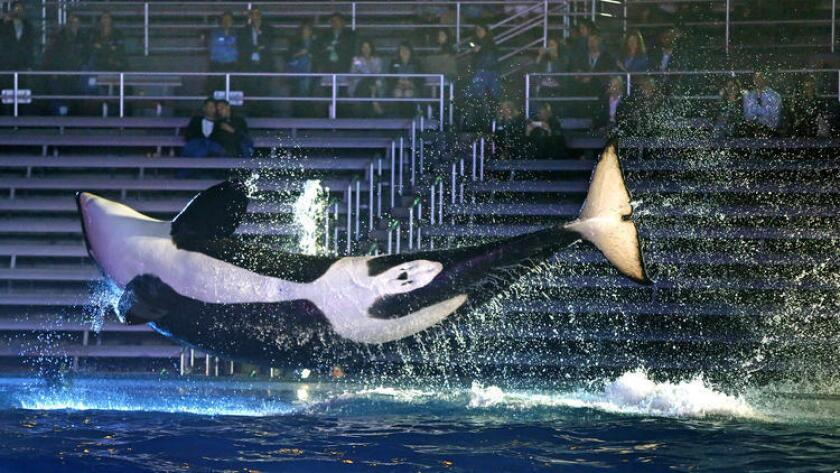 Presionado por la controversia sobre el tratamiento que le da sus orcas, Sea World San Diego anunció sus planes para una nueva atracción que impulse la asistencia que últimamente se ha visto disminuida.