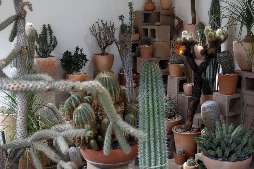 The Cactus Store in Echo Parksells desert-friendly plants.