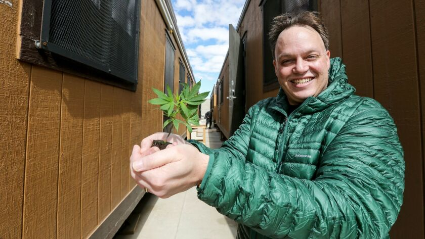 Spencer Vodnoy, co-founder and CEO of Critical Mind Inc., a marijuana cultivation business in Adelan