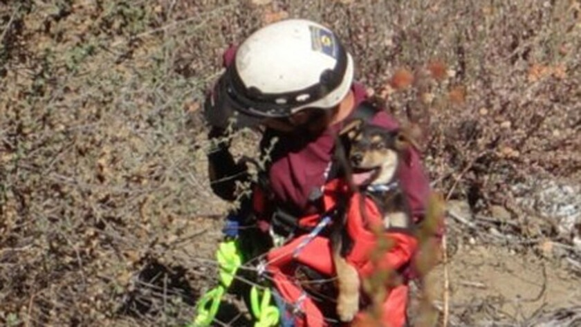Animal Control officer Denise Gove rescues a 10-week old puppy that fell into a ravine in Pauma Valley.