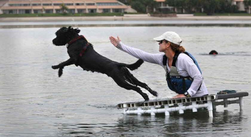 Dog trainer Lara Schindler works with her Portugeuse water dog Snorkel at Fiesta Island in this file photo. The dogs are bred to work with fishermen, doing chores like pulling nets and retrieving buoys. Schindler is owner of Happy Dog, Happy Owner.