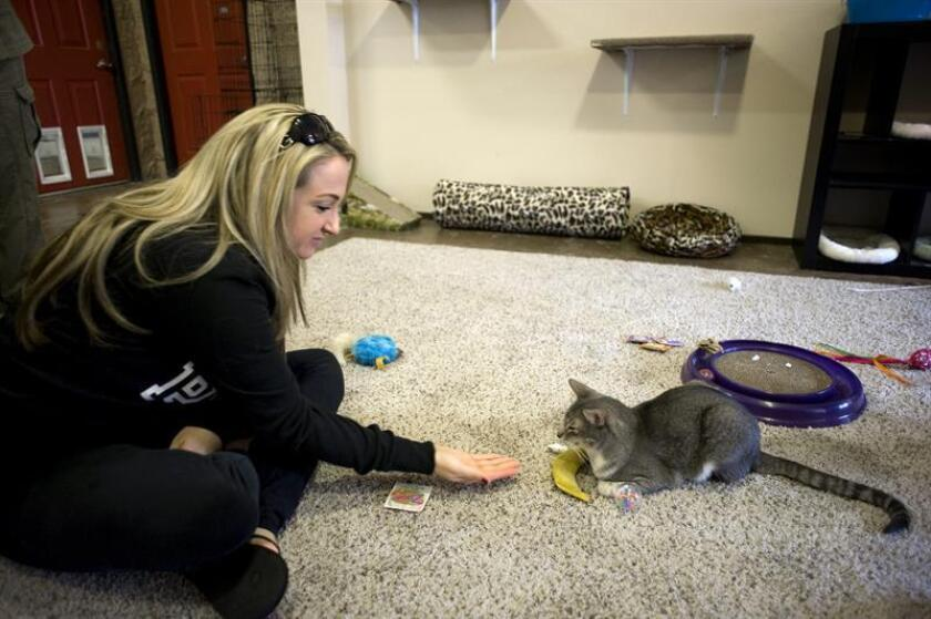 Una mujer juega con un gato. EFE/Archivo