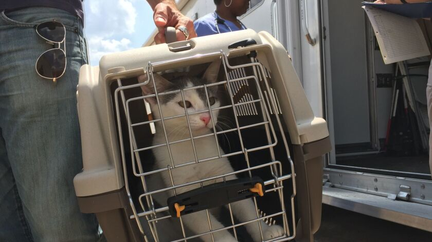 After Harvey, Texas rallies to rescue cats and dogs, with