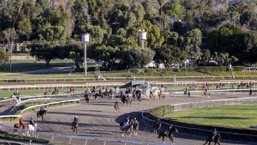 3074059_SP_0308_Horses_Racetrack_IK