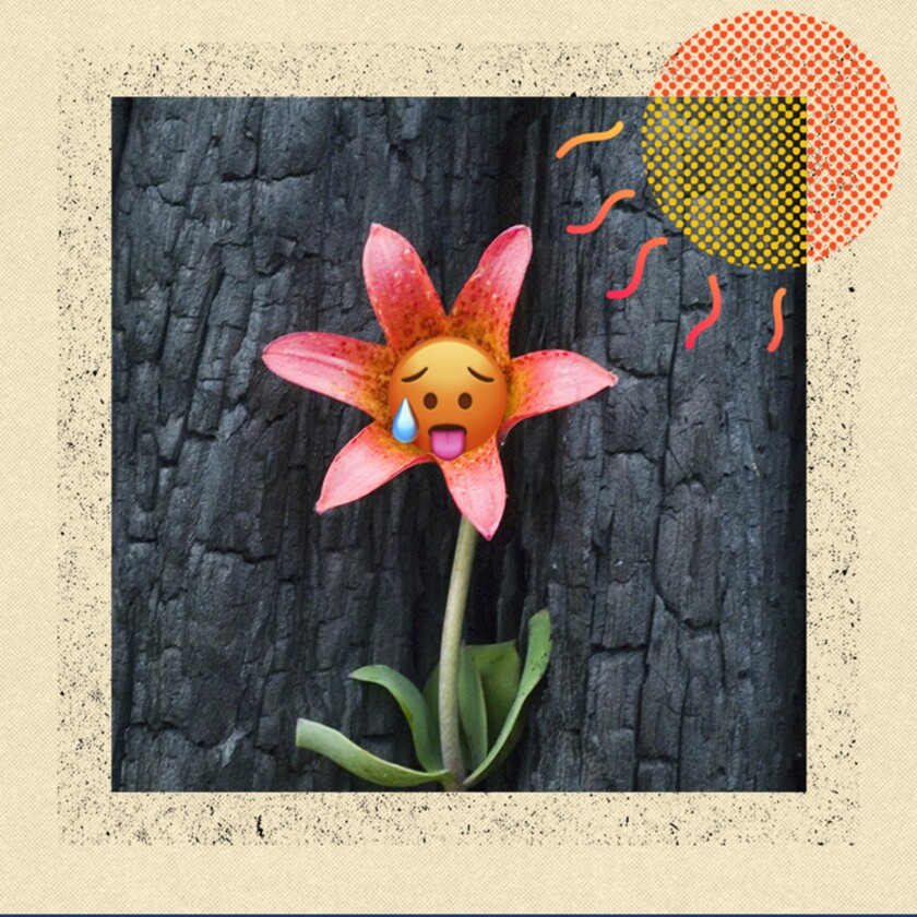 An illustration of a flower surrounded by scorched wood.