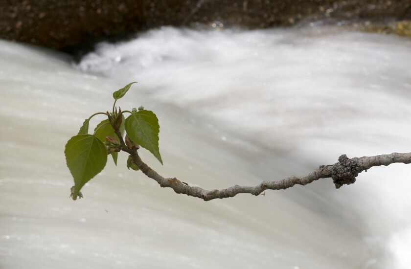 A tree branch sways in the breeze while water flows down Lone Pine Creek in Lone Pine.