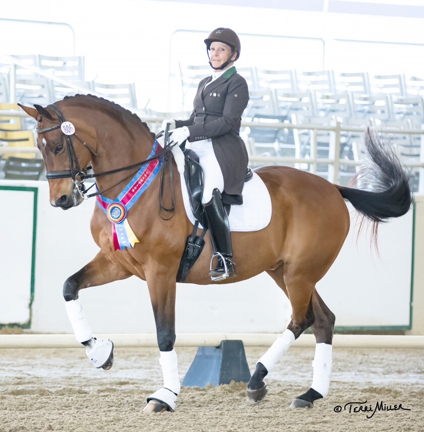 Terri Rocovich's award-winning horse, Uiver, displays one of the many ribbons they've won together at top-tier dressage competitions.