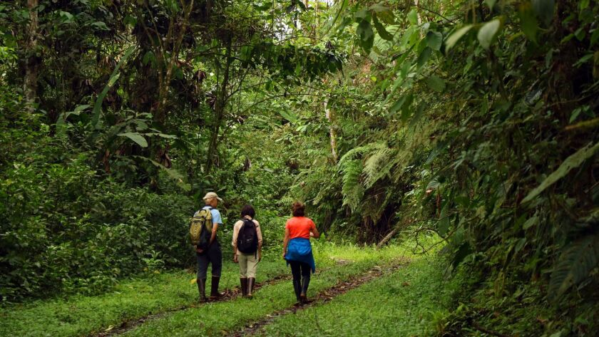 At Buenaventura, we spent our time either hiking through the lush forest or watching birdlife from t