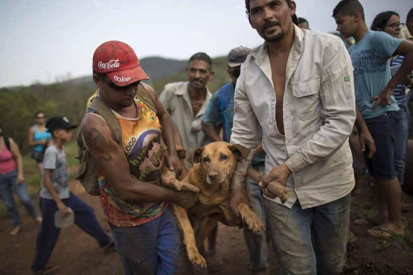 People carry an injured dog they rescued in the small town of Bento Rodrigues, which flooded after a dam burst in Minas Gerais state, Brazil, Saturday, Nov. 7, 2015. Brazilian searchers are looking for people still listed as missing following the Thursday burst of two dams at an iron ore mine in a