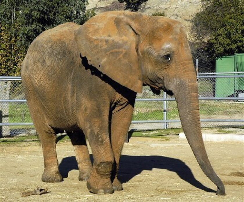 FILE - In this file photo originally released by the Los Angeles Zoo, shows Ruby the elephant on Nov. 14, 2004. Officials say Ruby, a 50-year-old African elephant who was moved to a sanctuary after protests over her confinement at the Los Angeles Zoo died March 29, 2011 at the Performing Animal Wel