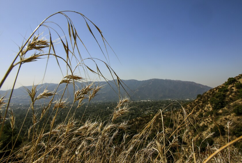Wild grasses sway in the breeze along the Earl Canyon Mountainway trail.