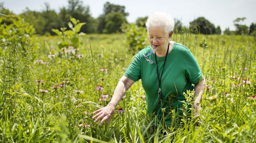 Charlotte Adelman visits the Centennial Prairie Garden in Wilmette, Ill.,which she helped establish. Adelmen is one of the plaintiffs in a federal lawsuit trying to block the construction of the Obama Presidential Center in Chicago's Jackson Park.
