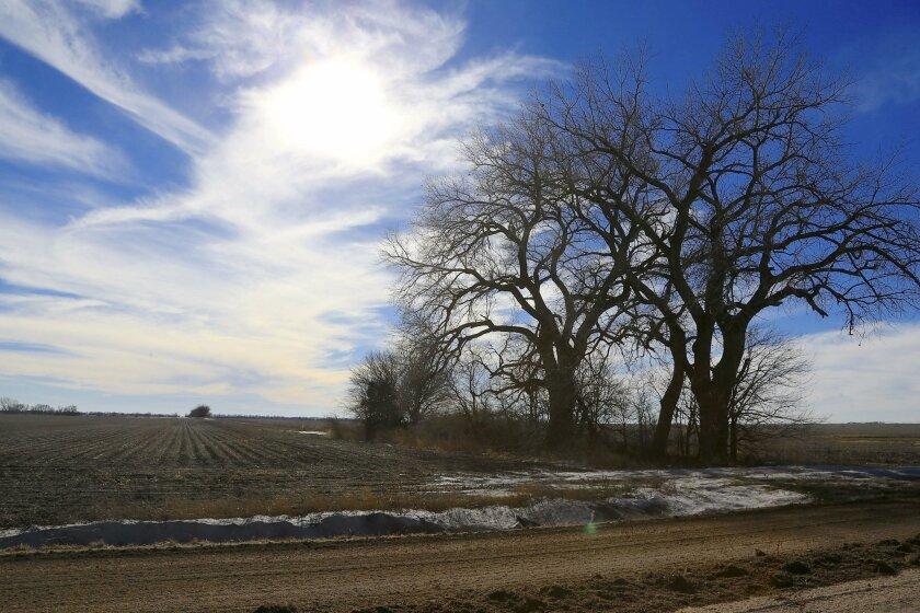 FILE - In this Jan. 16, 2015 file photo, trees dominate a field through which the Keystone XL pipeline is planned to run, near Bradshaw, Neb. The company behind the controversial Keystone XL pipeline from Canada to the U.S Gulf Coast has asked the U.S. State Department to pause its review of the pr