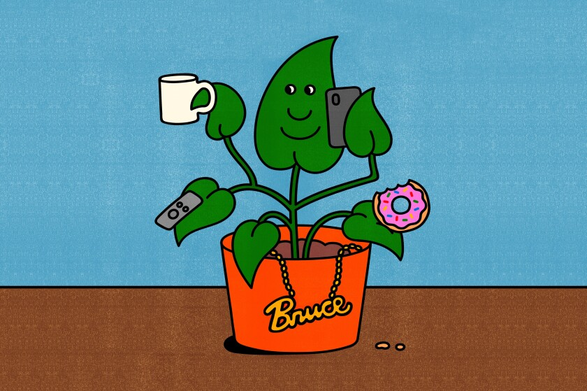 A house plant named Bruce.