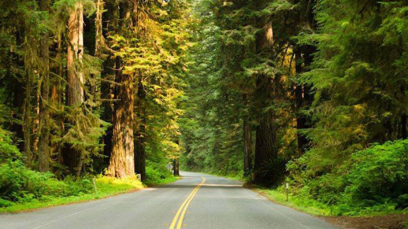 Newton B. Drury Scenic Parkway is a 10-mile detour among towering redwoods in Northern California.