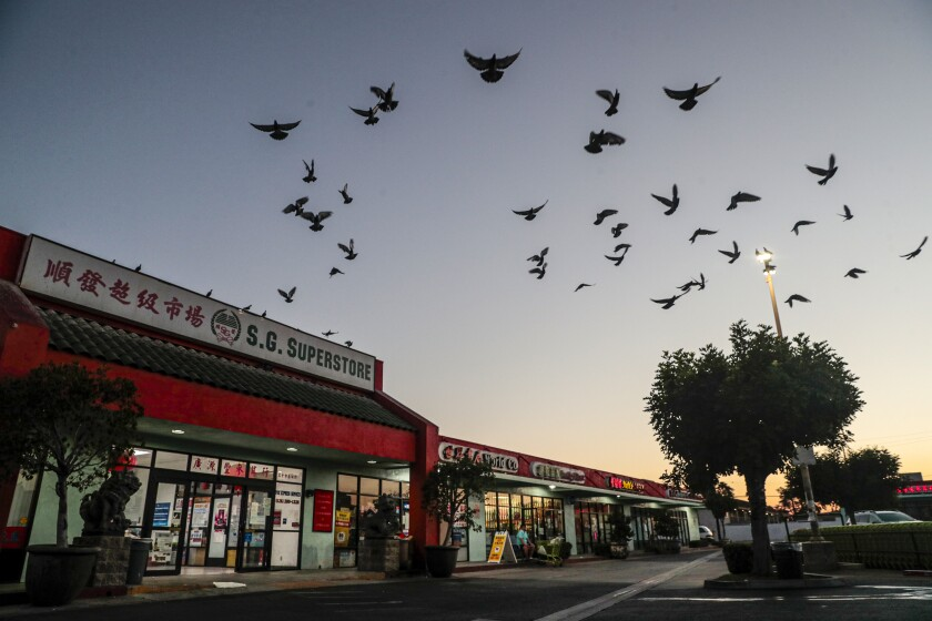 A flock of birds silhouetted above a strip mall.
