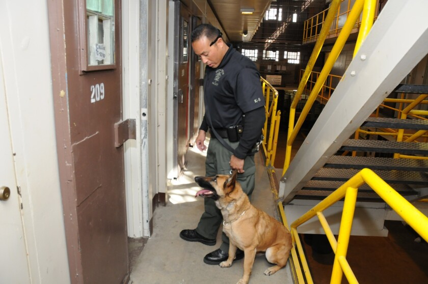 A corrections officer directs a drug-sniffing dog within a California prison in this undated photo. The state is expanding its screening of inmates, workers and visitors to dampen the behind-bars drug trade.