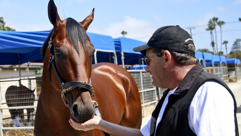 Triple Crown winner American Pharoah gets a treat from assistant trainer Jim Barnes in the stables at Del Mar on July 14.
