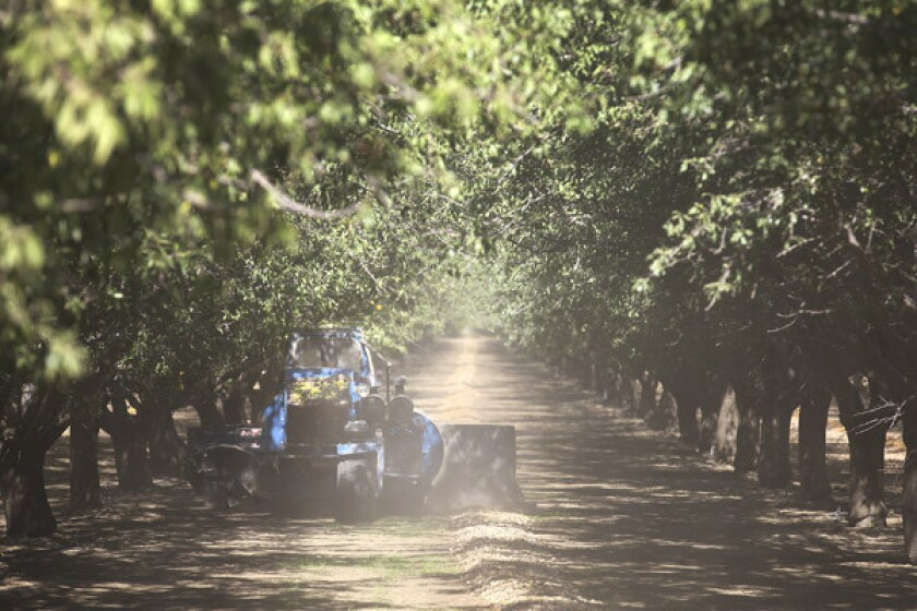 Stuart Woolf among harvested almonds in an orchard on part of the 25,000 acres his family farms near the Central Valley town of Huron.