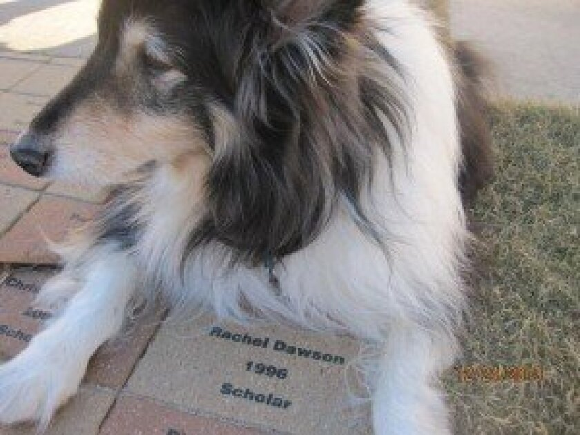 Rachel's dog, Snickers, guards her brick. Snickers died in early 2014.