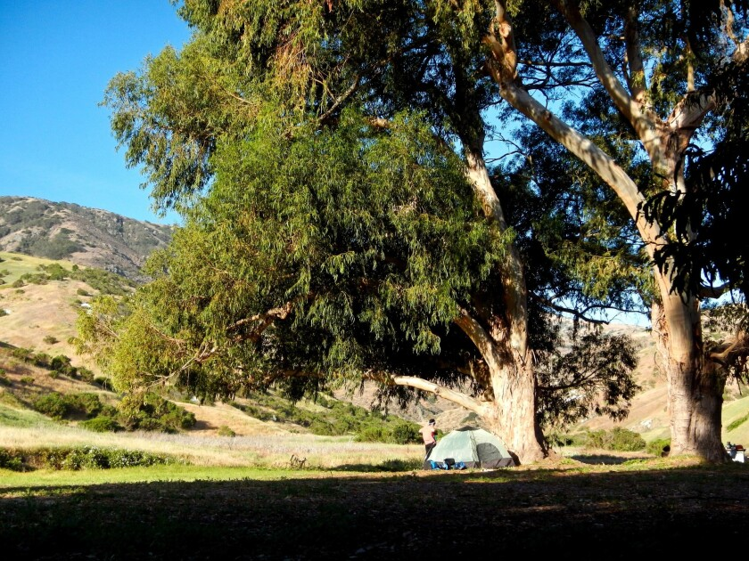 Campsites in the Scorpion Campground have lovely views of the hills, and are prime scavenging territory for the endemic island fox.
