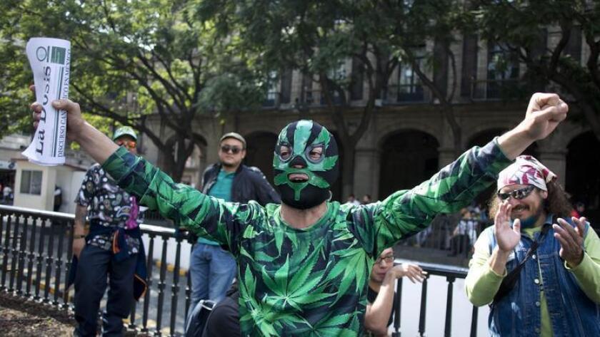 Un partidario de la legalización de la marihuana festeja afuera de la Suprema Corte después de que esta dictaminó para legalizar la marihuana el 4 de noviembre.