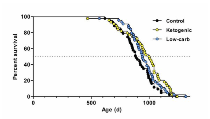 Survival of mice, in days, on a control, a ketogenic and low-carb diet.