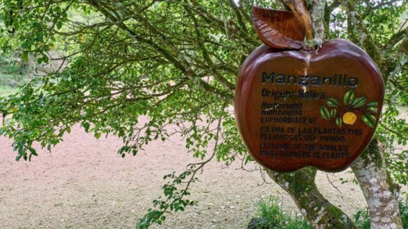 ¡Cuidado con el árbol!: No es un aviso común pero en este caso, necesario.