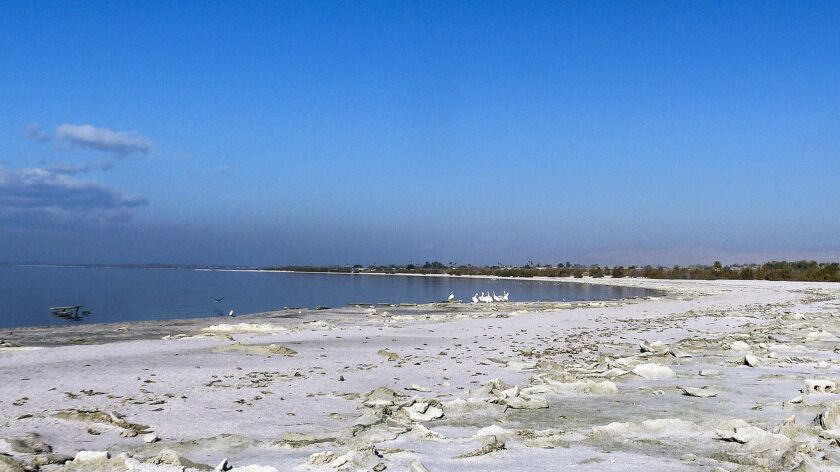 The crusty edge of Salton Sea at State Recreational Area. Photo by Sara Lessley