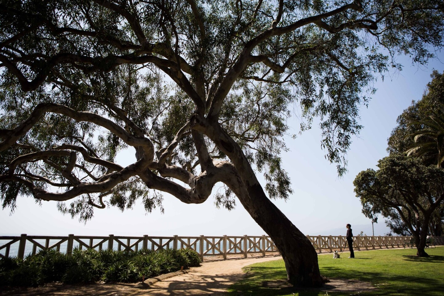 The median home price for the 90402 ZIP Code in Santa Monica is $2,621,000. Above, Palisades Park north of Montana Avenue.