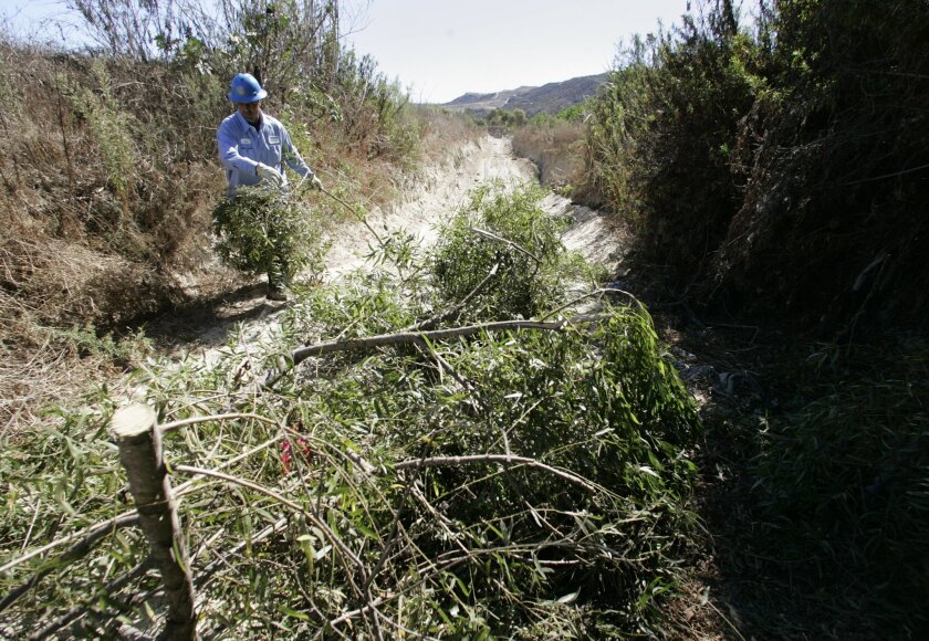 Jose Sanchez of the city of San Diego's Stormwater Department cleared brush from a flood-control channel in the Tijuana River Valley yesterday.