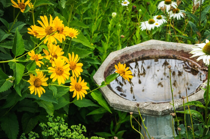 A birdbath in the garden provides a water source for pollinators as well as birds.