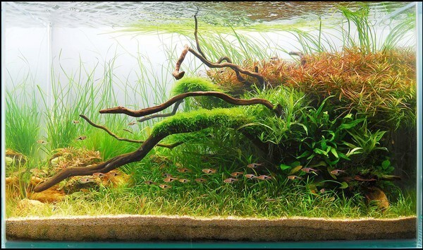 """Who says an aquarium has to be all about fish? All over the world, planted aquarium enthusiasts practice the art of underwater gardening -- creating lush, natural-looking landscapes that live in the confines of a tank. These hobbyists communicate via the Internet, trading plants and information. They also trade pictures of their tanks. Each year the Aquatic Gardeners Assn., a group of enthusiasts 1,300 strong, holds a contest to name the best tanks in the world. Here you'll find the winning aquascapes of the past five years and get a taste of a whole new way to look at an aquarium. To read more about the art of aquascaping from California to Japan, read our story here. -- Deborah Netburn 2nd place aquatic garden medium: 172 liters (46 gallons) """"Rhythm of Nature"""" by Harry Kwong, Ma Tau Wai Estate, Hong Kong"""