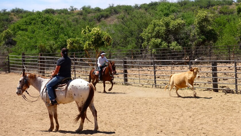 Sasabe AZ – April 28: Guests learn to herd cattle at Rancho de la Osa. Head wrangler Ross Knox say