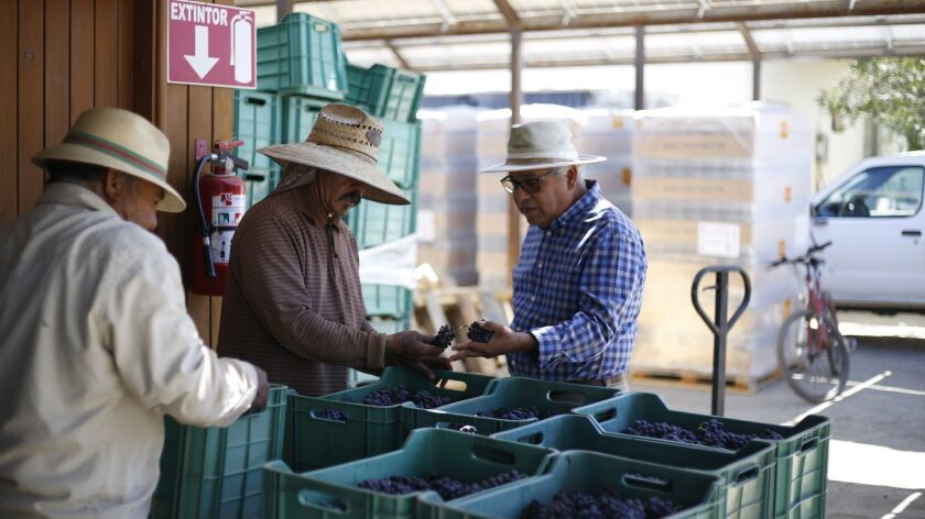 Valle de Guadalupe's people, wineries and restaurants.