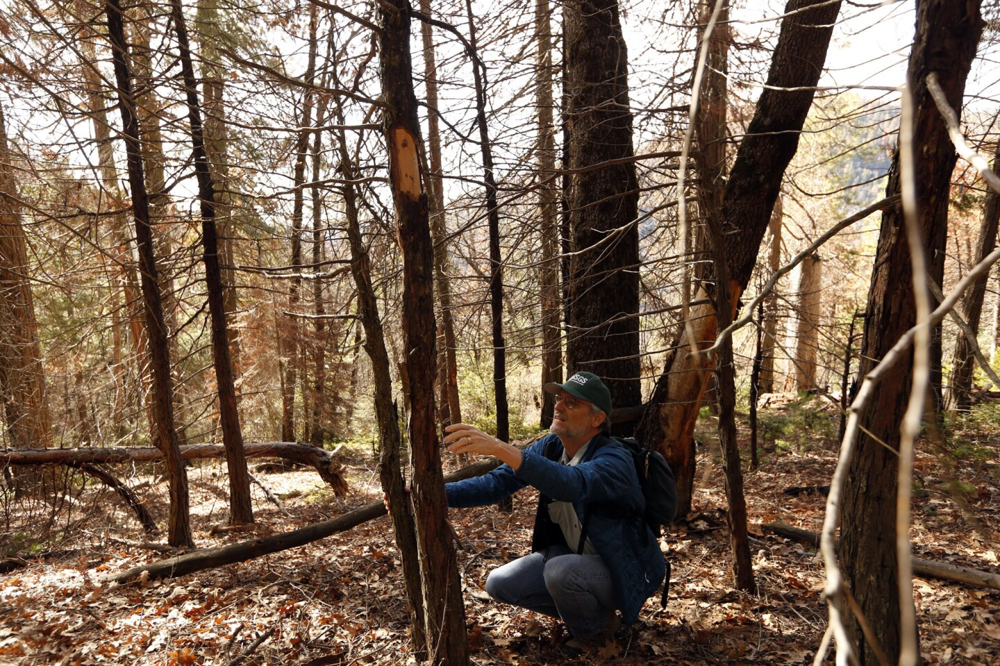 Research ecologist Nathan L. Stephenson looks over a dead incense cedar tree in a plot of land that ecologists have been studying since 1992 in the Sequoia National Park.