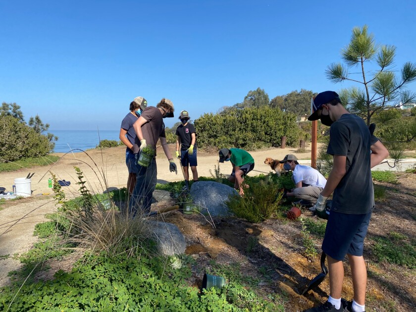 Volunteers at work on Native Del Mar's restoration project on the Del Mar Bluffs.