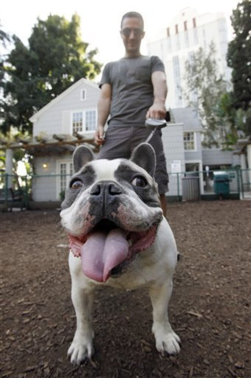 """Monty, a 3-year-old French bulldog, and his owner Andreas Mathieu visit  at William S. Hart park, an off-leash facility for dogs and their owners, in West Hollywood, Calif., Tuesday, Feb. 16, 2010. This famously quirky city that formally recognizes pets as """"companions"""" and their owners as """"guardian"""