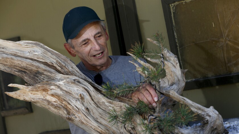 Artist Jeff Weiss of Santa Monica tinkers with a bonsai facsimile of Prometheus, the name of his long-departed bristlecone pine, at Kimura Nursery.