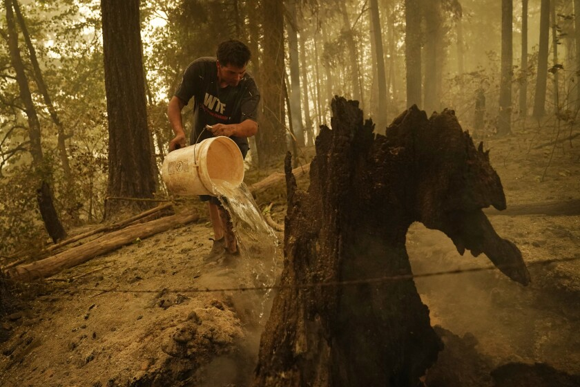 Erik Tucker pours water on a smoldering stump in an area burned by the Beachie Creek Fire, Saturday, Sept. 12, 2020.