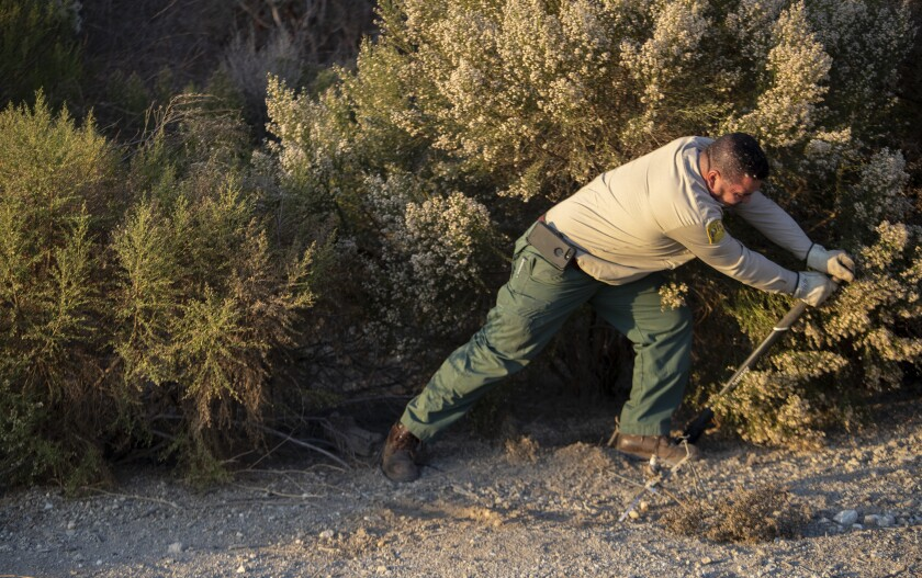 Fernando Barrera removes a coyote trap.