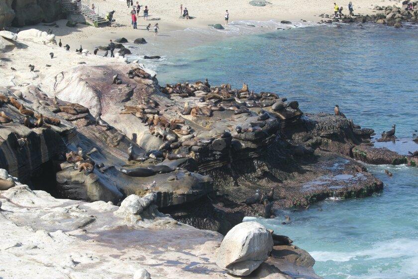 Sea lions rest along the bluffs at La Jolla Cove.
