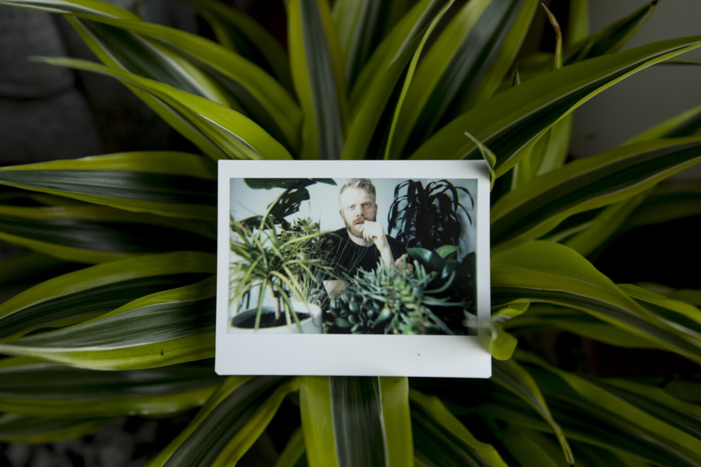 Passionate plantsman Tommy Engstrom, 30, in his Culver City apartment.