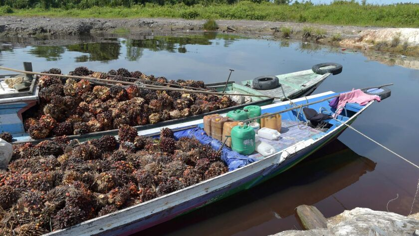 Oil palm seeds are loaded onto boats in Kendawangan in West Kalimantan, Indonesia, on Feb. 14, 2017.