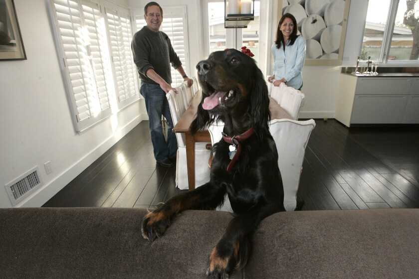 Steve and Paula Kopald photographed with Jack, a 2 year old gordon setter, inside their home in Brentwood.