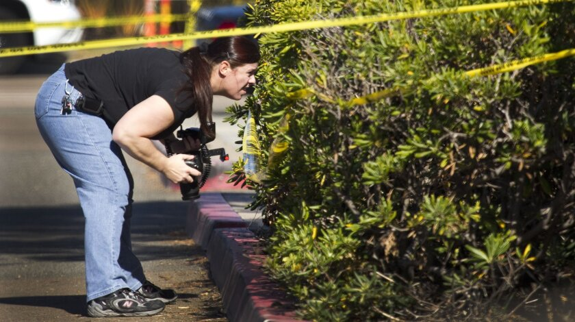 A San Diego police forensic specialist looks in the bushes where a man's body was found off North Harbor Drive near Nimitz Boulevard on an access road to the Marine Fisheries Center in Point Loma about 8:30 a. m.