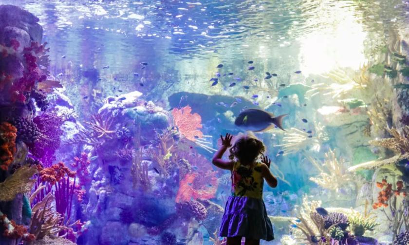 El Birch Aquarium de La Jolla reabrirá al público el 1 de julio.