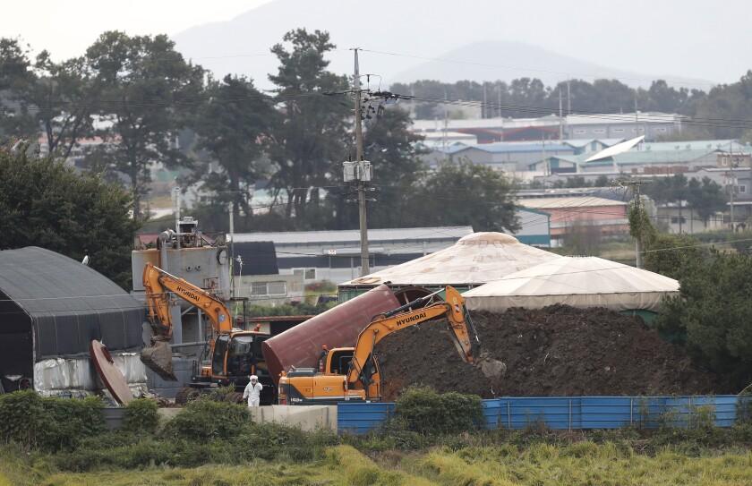 South Korea Koreas Swine Fever