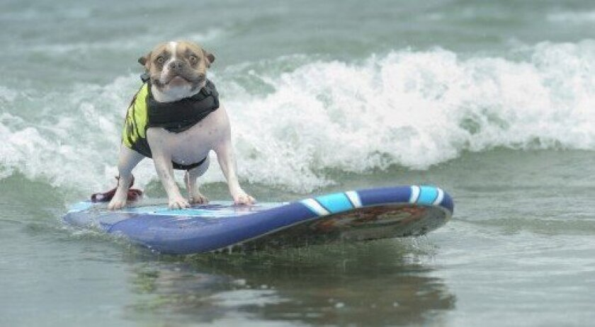 Cherie the surf dog
