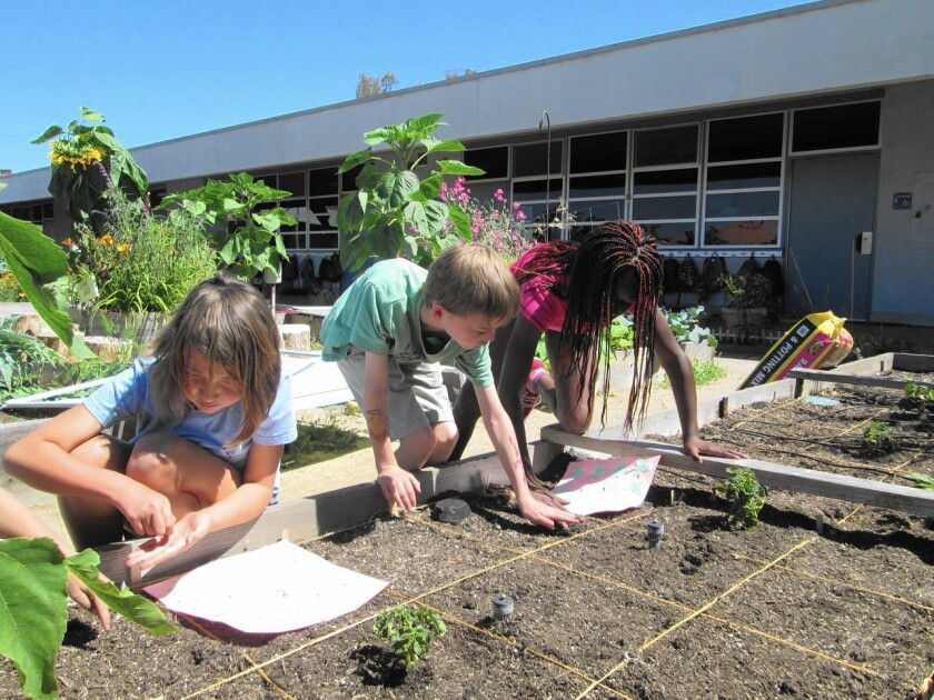 Davis Magnet School's existing garden beds will soon have a large Outdoor Learning Center added to it. The center will allow all grade levels at Davis to have garden areas outside their classrooms.